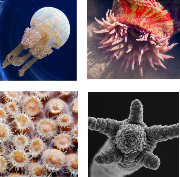 Sponges And Cnidarians Lesson 0369 Tqa Explorer
