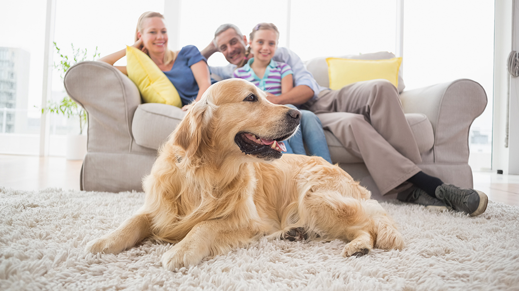 How to Get Rid of Pet Dander in Your House