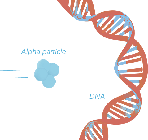 DNA hit by alpha particle
