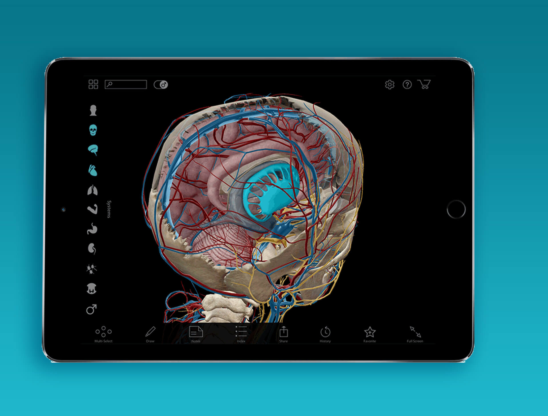 Human Anatomy App Development Service Ais Technolabs