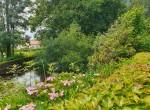 20200600 étang fleuri