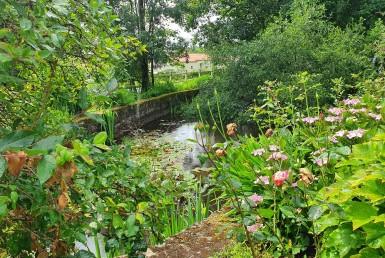 20200600 étang fleuri (2)
