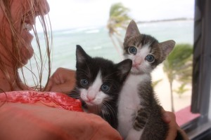 These kittens were found in the trash when they were just two days old, but here they are at six weeks, flourishing!