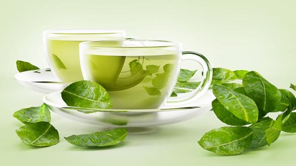 Green tea for osteoarthritis care