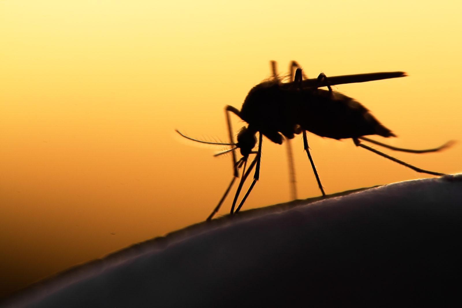 Malaria: Causes, Symptoms and Treatment