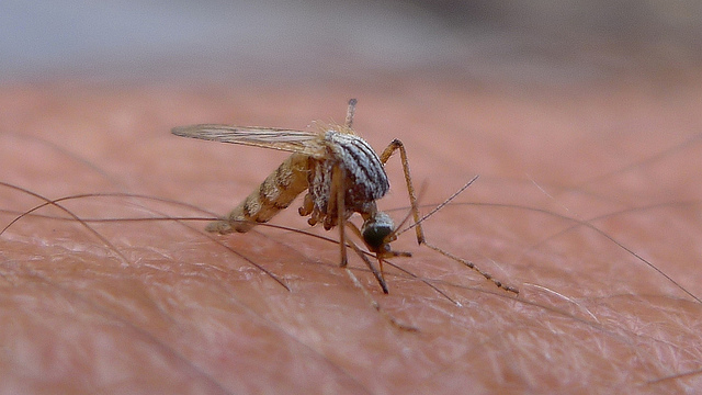 Cincinnati's Health Department is working hard to identify sources of mosquito-borne viruses