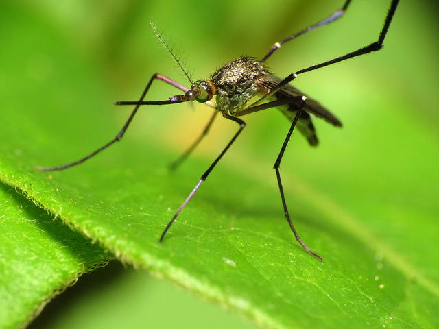 Zika Virus Under Control, Says Rajasthan Health Minister