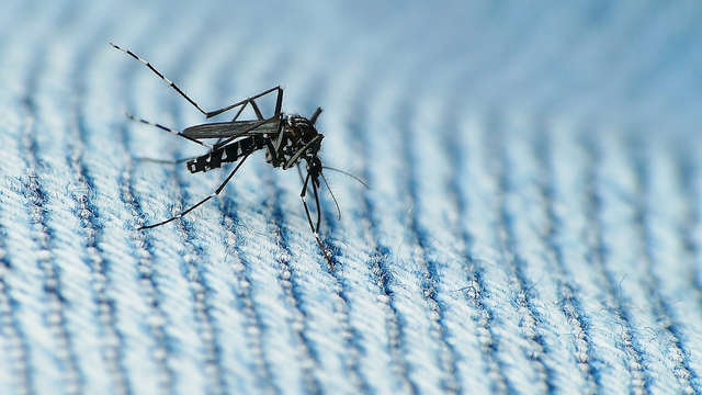 Some patients of dengue may not have fever, warn doctors