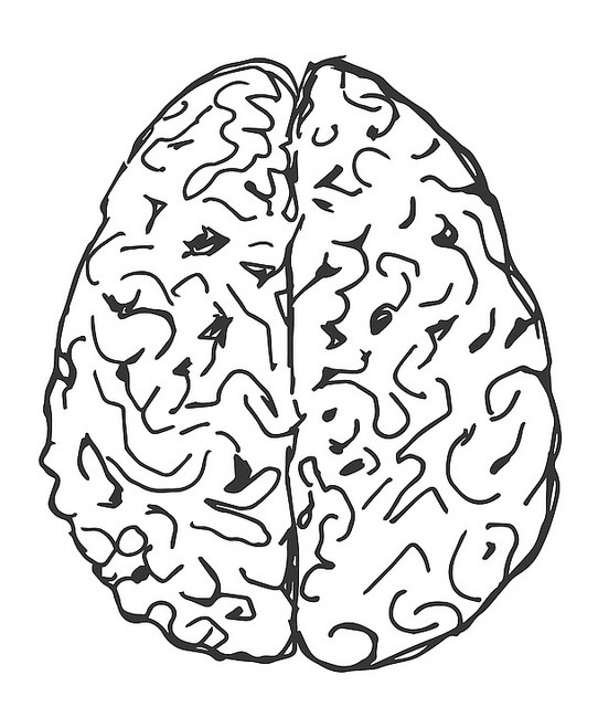 Does having a bigger brain make you more intelligent?
