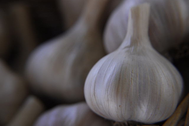 Garlic Oil Can Kill The Bacteria That Causes Lyme Disease: Study