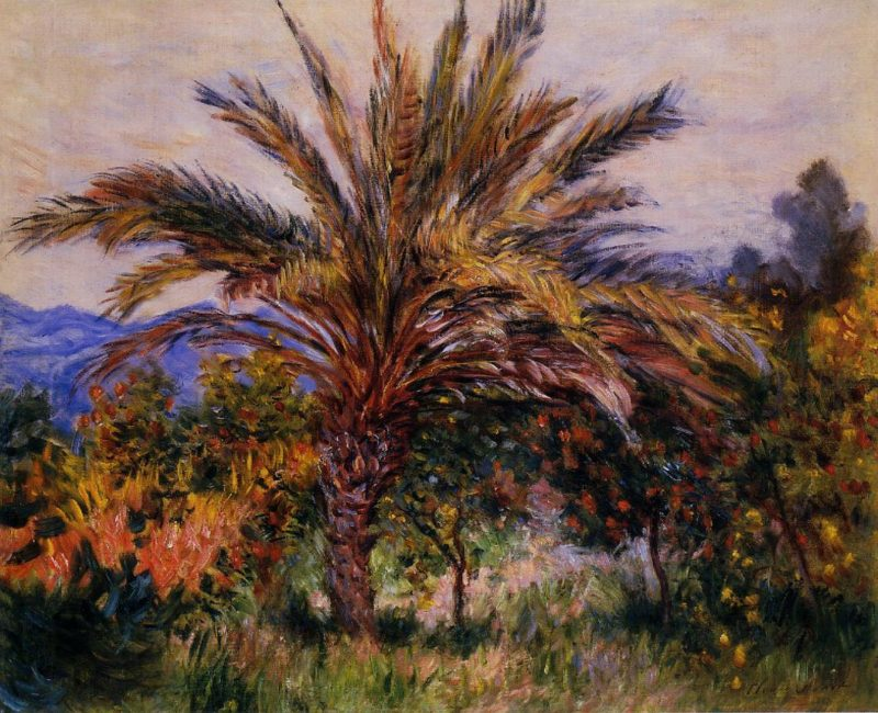 A Palm Tree at Bordighera 1884 | Claude Monet | Oil Painting