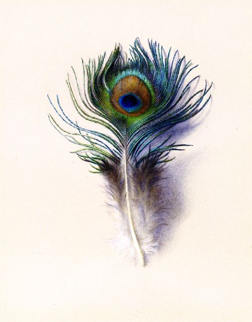 Peacock Feather | Charles Herbert Moore | oil painting
