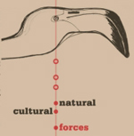 Natural/Cultural Forces