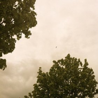 Album Elegy by Fredrik Uhlmann