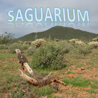 Album Saguarium by Tom Lemczyk