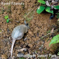 Armadillo In Sunset Park