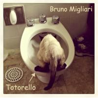 Totorello
