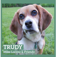 Album Trudy by Mike Lorenz
