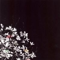 Album Escondido Dreams
