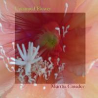 Unnamed Flower