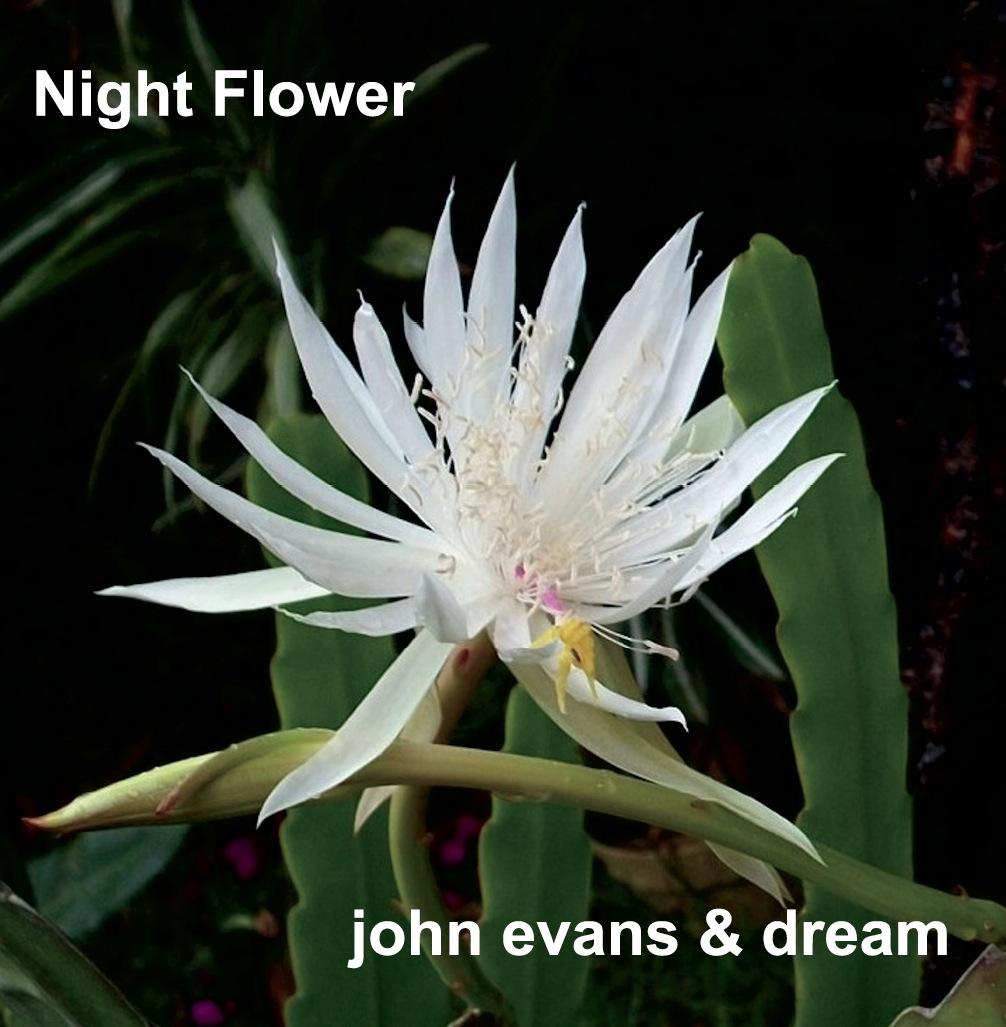 Night flower album cover