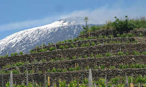 Jazz article: Red Wines From Etna