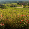 "Read ""Hooray for Beaujolais!"" reviewed by Matt Penman"