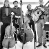 Musician page: The New Acoustic Collective