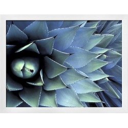 pattern in agave cactus by adam jones white wood framed photographic print blue - Pattern in Agave Cactus by Adam Jones White Wood Framed Photographic Print, Blue