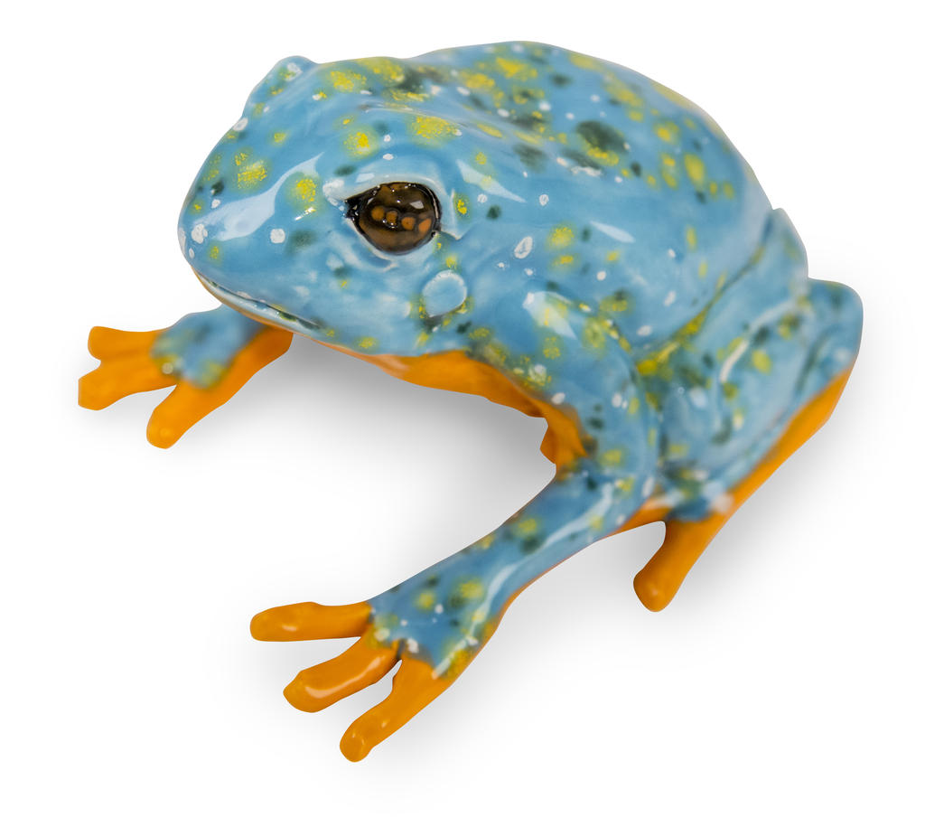 Large amphibians 8119 copy