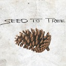 SEED TO TREE - Pine cone (Single)