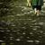 Kate Young - Grow Down (Radio Edit)