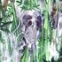 Drippin - Waterfall