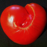 Ysanne - Tomato Song