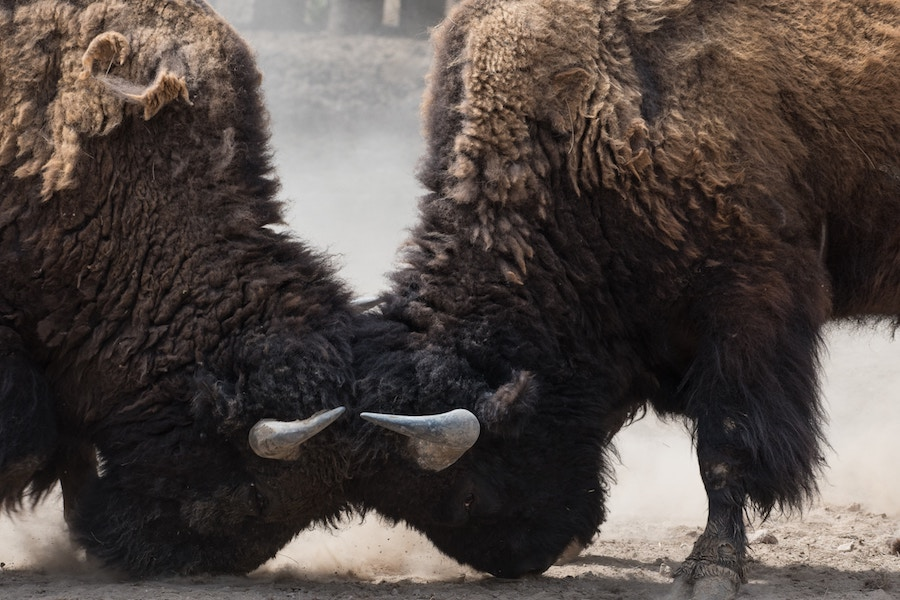 Bitcoin's price remains bullish in short-term but bears have taken over long-term