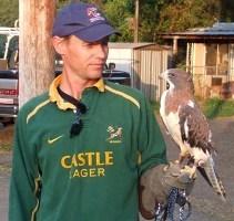 Kramer Swainson's Hawk