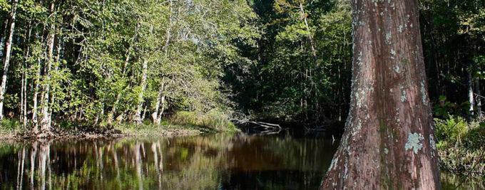 Edisto River, SC | Hugo Krispyn