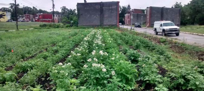 Real Food Farm's Perlman Place Site in Baltimore, MD | Civic Works' Real Food Farm