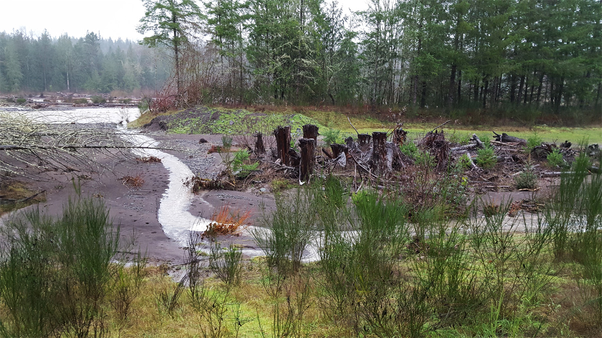Reviving floodplains to restore habitat and reduce flood for Puyallup river fishing