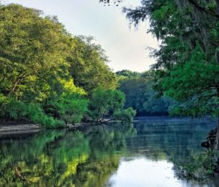 Edisto River | Allen Forrest