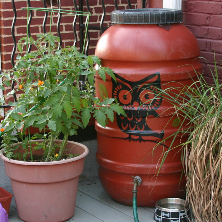 How Do Rain Garden And Rain Barrel Initiatives Help Rivers