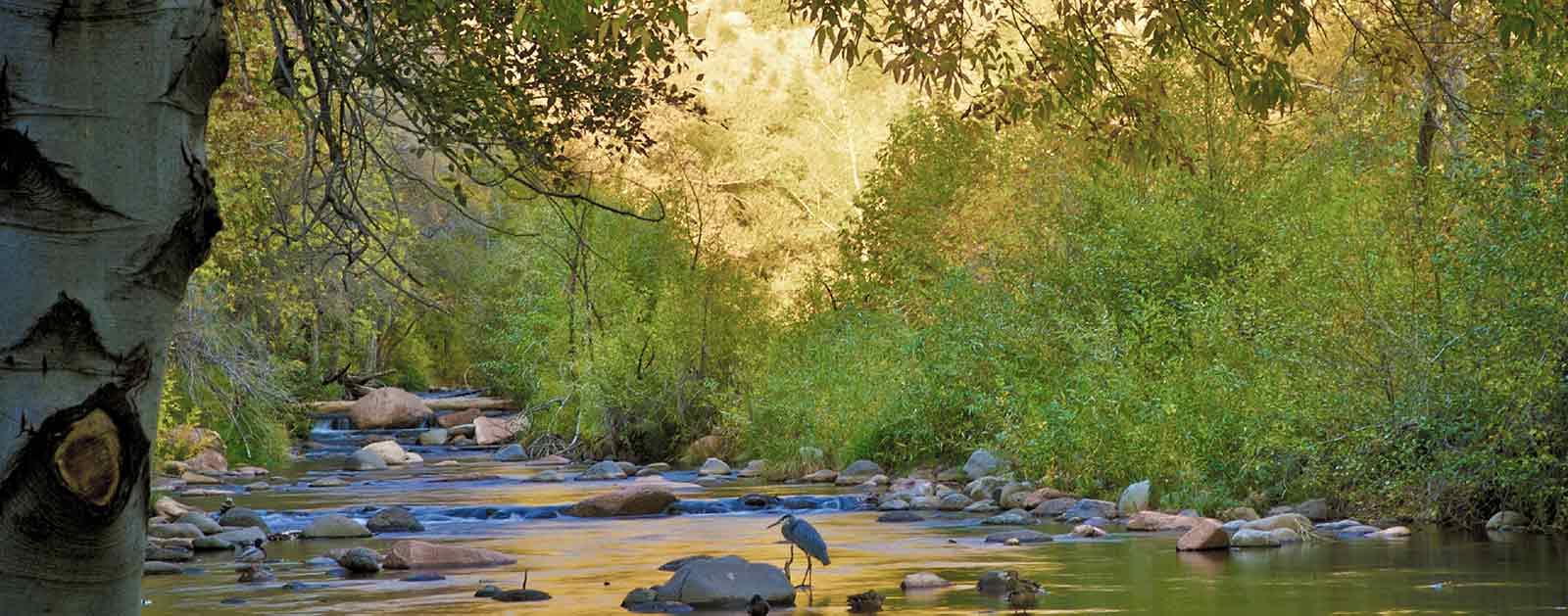 verde river american rivers. Black Bedroom Furniture Sets. Home Design Ideas