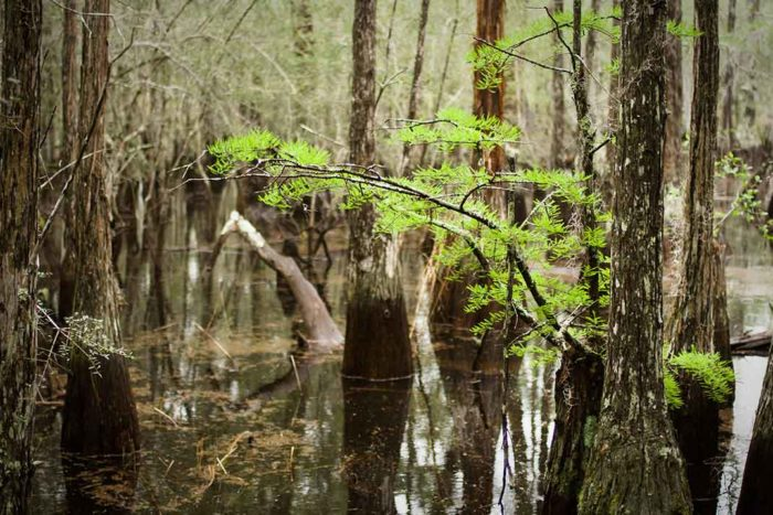 Apalachicola National Forest | Justin Meissen [flickrcc]