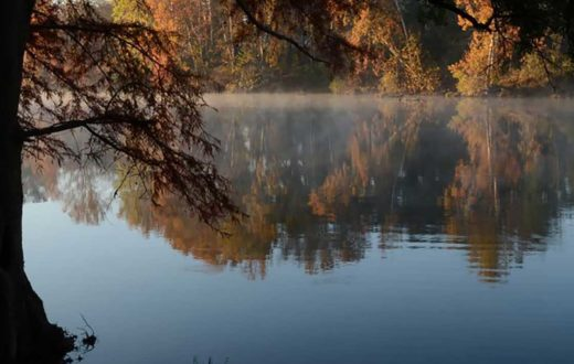 Flint River, GA – Fall Colors   Robin Singletary