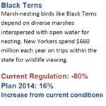 Black Tern Statistics