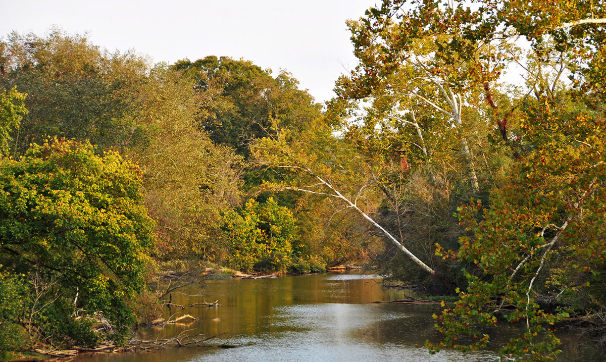 Neuse River | Jame Willamor