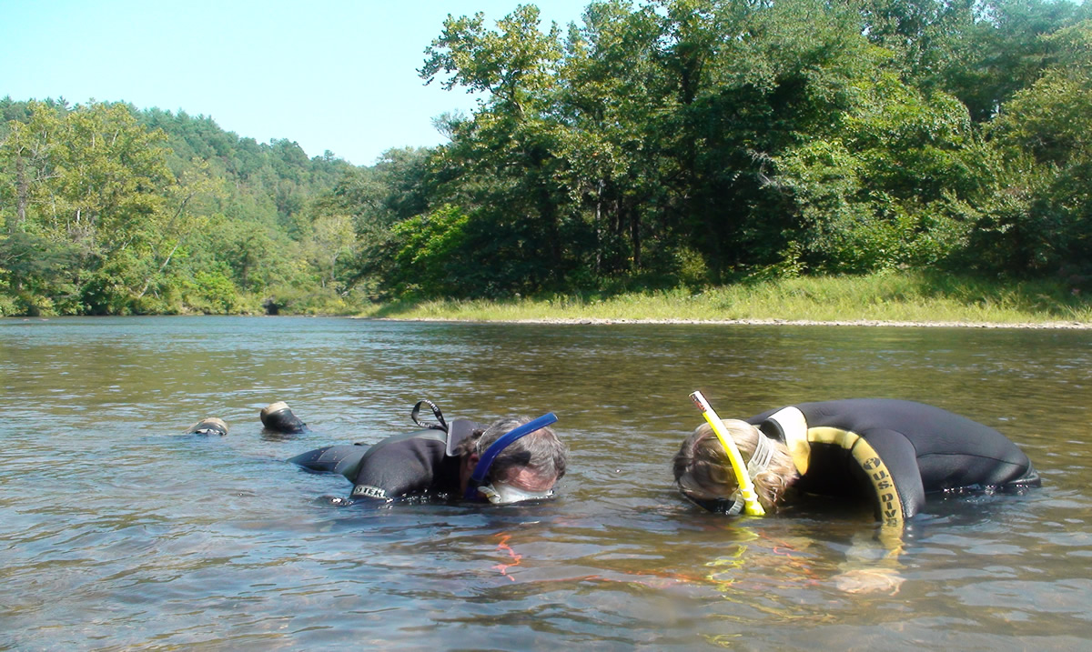 Mussel search on the Little Tennessee River | Gary Peeples/USFWS