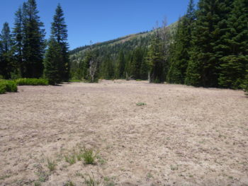 A large, barren patch of a meadow made us wonder what had happened here. | Bonnie Ricord