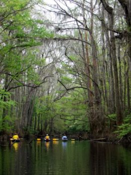 Cedar Creek, Congaree National Park SC | Gerrit Jöbsis
