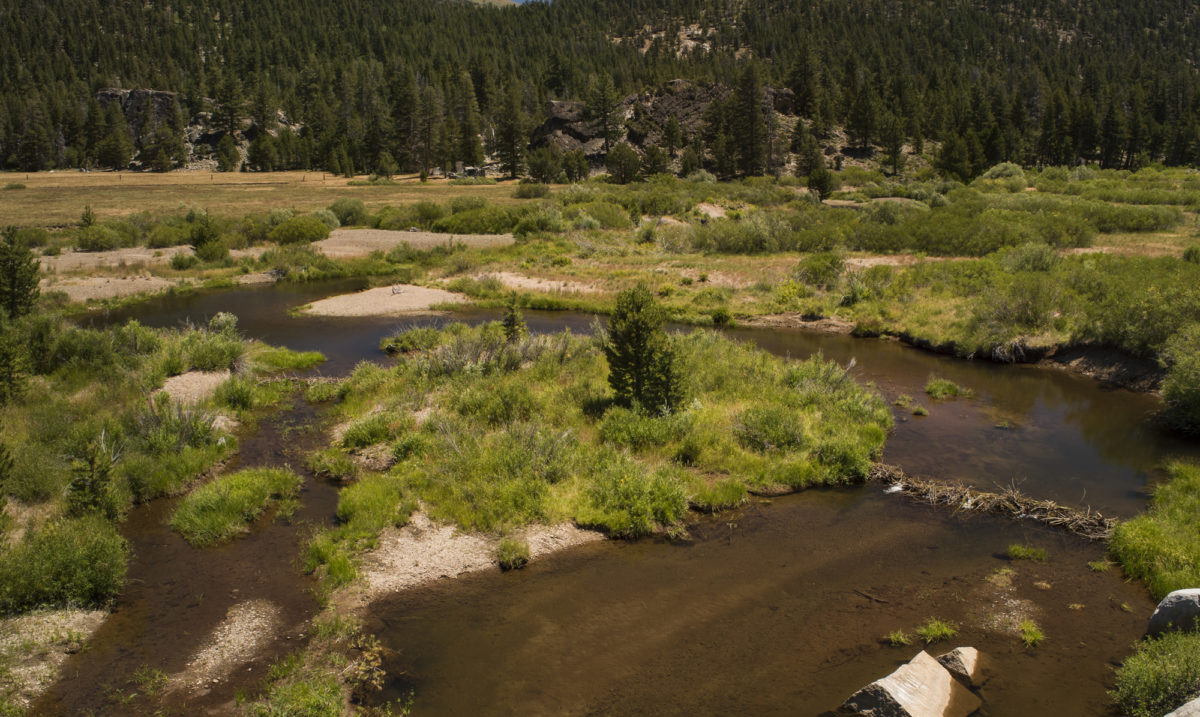Active beaver dams just upstream of the upper restoration area. | Daniel Nylen